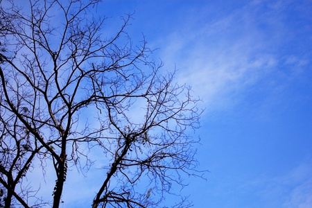 Naked branches of a tree against the blue sky photo