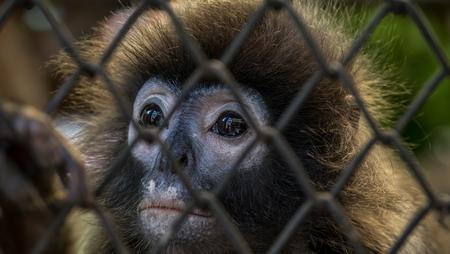 face to face: monkey face Stock Photo