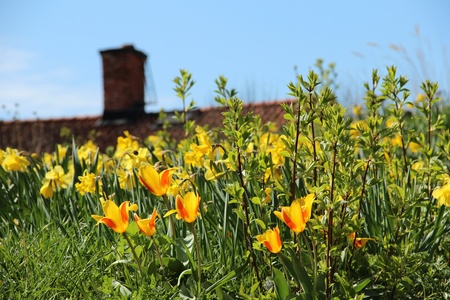 Spring flowers on a hill with old cottage in the background Stock Photo - 13413386