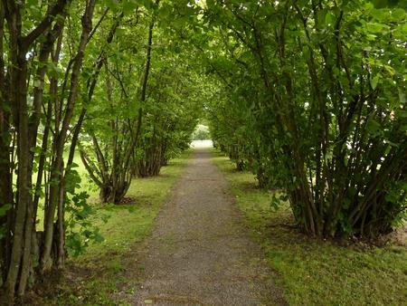 hazel tree: Hazel tree avenue