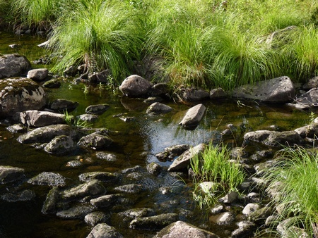 riverbed: Riverbed with mossy stones and clear water