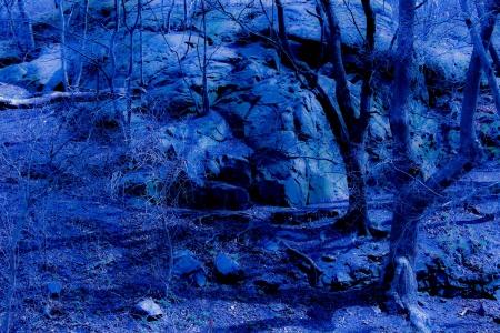 Blue fantasy twilight forest photo