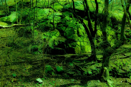 Twilight Fantasy Green Forest photo
