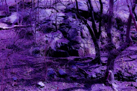 Purple Fantasy Twilight Forest photo