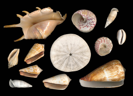 Sea shells with black background