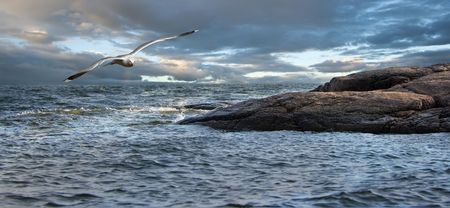 It is growing dark. A bad weather. The bird struggles with a wind, coming back to rocky coast.