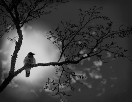 Night. A moonlight. To a raven is coldly and lonely.