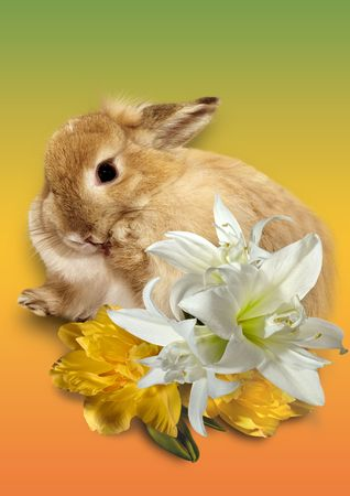 Bouquet of spring flowers in a gift from a lovely rabbit. Easter card. Stock Photo
