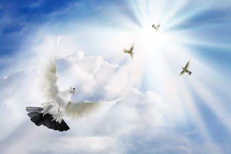 dove flying: Imagination on a theme of belief, hope and optimism. The belief and love do the person strong. And the happy moments will necessarily come. The sun will look  from the clouds and will light up and heat.