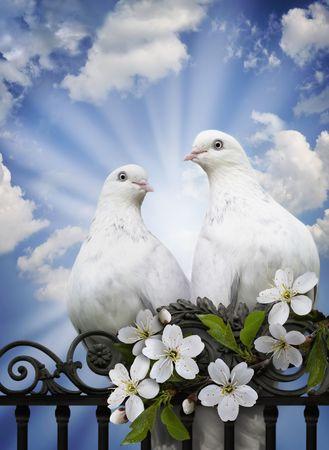 paloma blanca: Imaginación sobre un tema de amor, la primavera y la renovación en una espiritualidad y el corazón de la persona. Dos palomas contra el cielo azul en vigas solares del amor como un símbolo de la atención y la fidelidad. Cerezo rama como un símbolo de renovación y esperanza. Foto de archivo