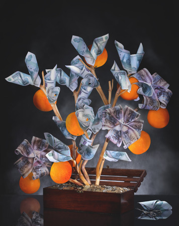 Money Tree. Imagination on a theme of investment. Wisely invested money should bring a good harvest. The image is made from multiple files. Stock Photo