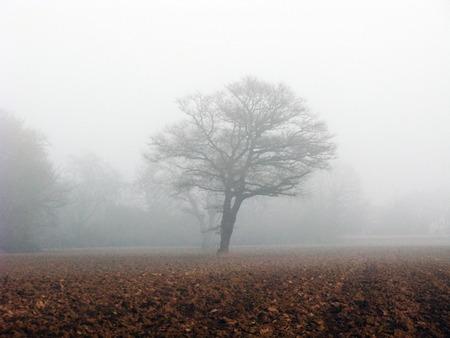 Arbre dans une clairière avec un épais brouillard