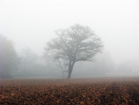 Tree in a forest clearing with thick fog Banque d'images
