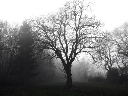 Photo d'un arbre dans l'obscurité mystérieuse forêt hantée sous le brouillard Banque d'images