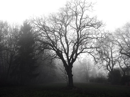 Photo of a tree in the darkness mysterious haunted forest under the fog