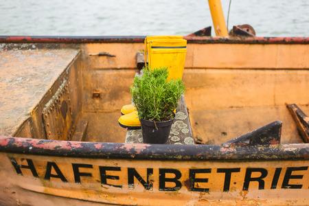 urban gardening: Rosemary in boat Stock Photo