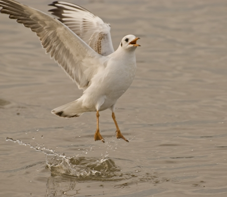 Wings of seagull photo