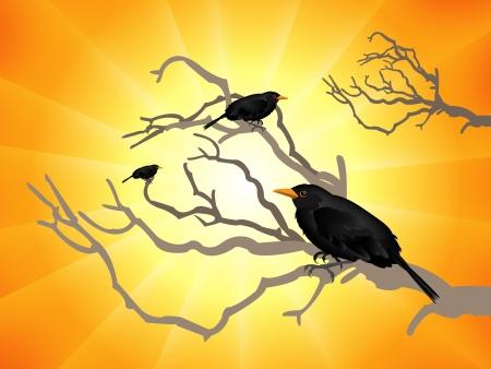 Black birds Stock Vector - 18516494