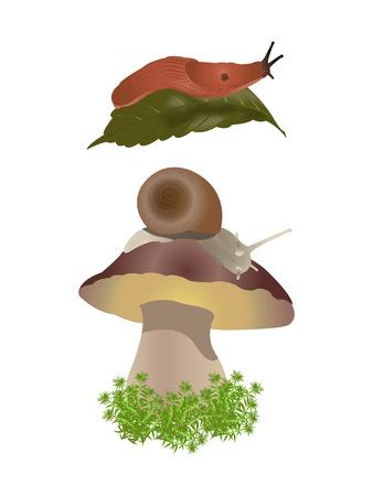 mollusc: Slug and snail