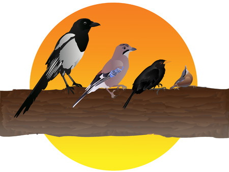 Autumn birds Illustration