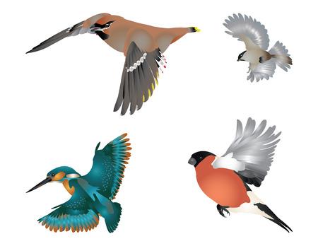 Collection d'oiseaux qui volent