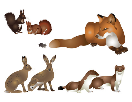 stoat: Collection of wild mammals