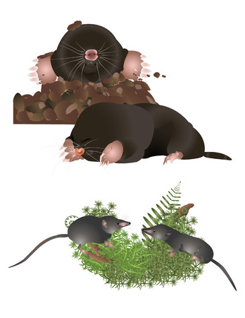 insectivorous: Insectivorous mammals