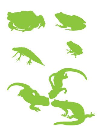 amphibians: Amphibians