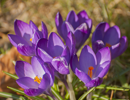 an awakening: Spring awakening Stock Photo