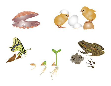Amazing nature set - new life Vector