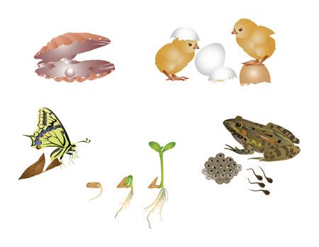 tadpole: Amazing nature set - new life Illustration
