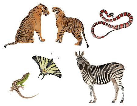exotica: Amazing nature set - dressed in stripes