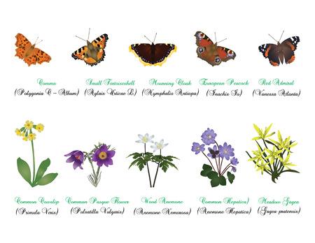 自然セット - 蝶と野生の花