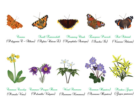 admiral: Nature set - butterflies and wild flowers