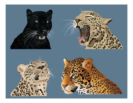 exotica: Big cats