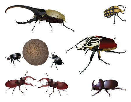 Amazing beetles