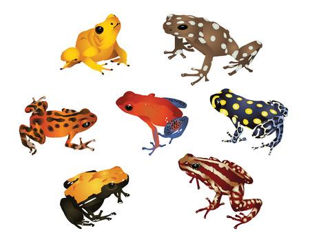 poison dart: Amazing frogs