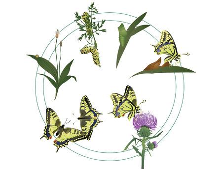 La vida de la mariposa Foto de archivo - 29951916