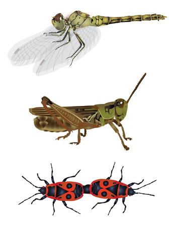 firebug: Amazing nature set - insect
