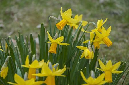awakening: Spring awakening Stock Photo