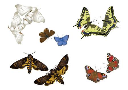 dusky: Butterfly couples