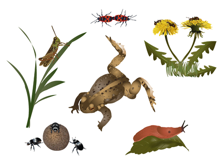 fauna: Nature set - small fauna and flora