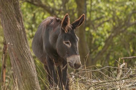 ungulate: Donkey Stock Photo