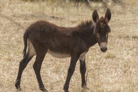 herbivorous animals: Donkey Stock Photo