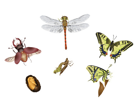 buterfly: Amazing insect world - Metamorphosis