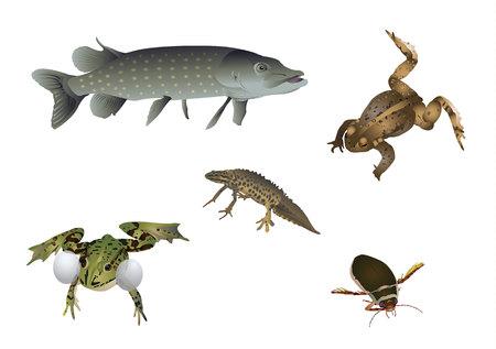 vertebrates: Amazing nature set - floating Illustration