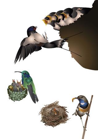 barn swallow: Amazing birds set - young birds