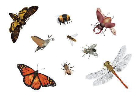 Amazing insects set - flying Ilustracja