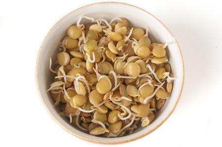 germinación: Salud en la semilla - la germinación
