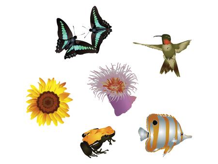 copperband butterflyfish: Amazing nature set - Jewels of nature Illustration